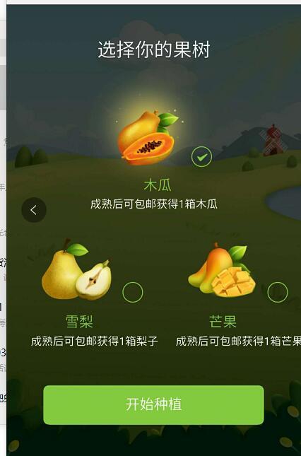 果园1.jpg