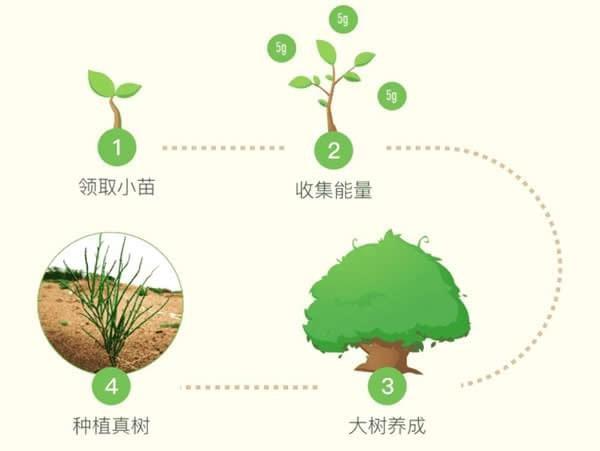 蚂蚁森林为啥没有能量